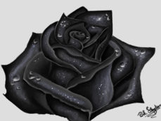 Dark Rose P/ Escarlate_