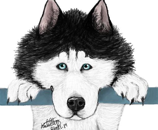 Husky Siberiano - Desenho de kelzinha00 - Gartic