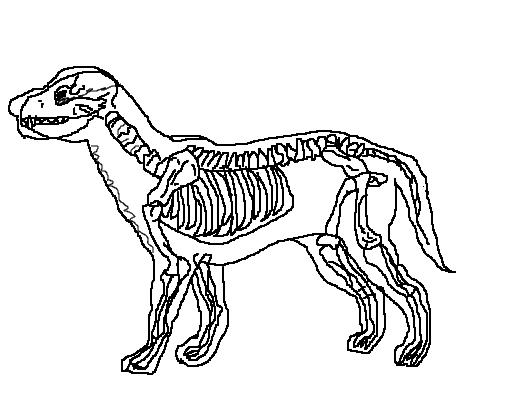 esqueleto de cachorro desenho de luquinhasdolly gartic