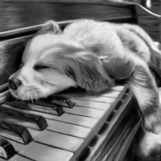 Dog no piano-p/Olivia