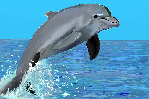 Golfinho p/ Maldita